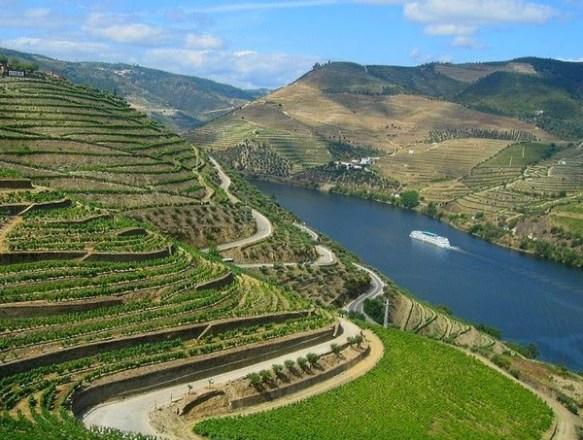 O Porto nasce das uvas plantados à margem do Rio Douro, em vinhedos quase que verticais e em solo pedregoso, de colheita difícil.