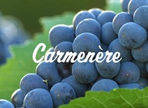 CARMENERE_DESTAQUE